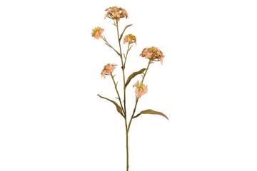 Blomst Iberis